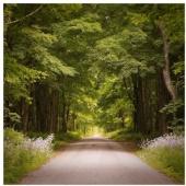 DennisChunga - Country Road