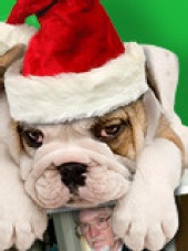 Rodney E. Langley - Holidays make you feel dogged?