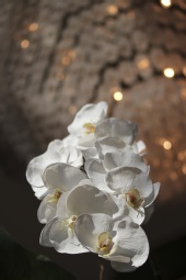 Jose Macias - chandelier