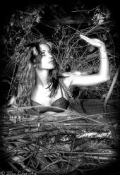 Blue Lotus Art Photography