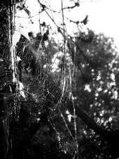 Pietro - The web